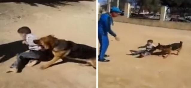 un enfant agressé par un chien en Algérie