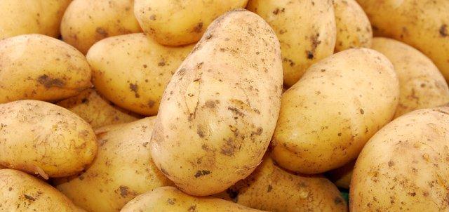 Les pomme de terres sous OGM